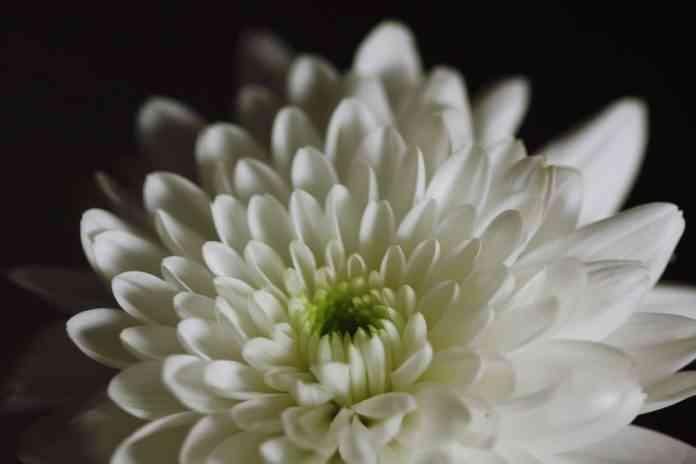 Eleccion de flores