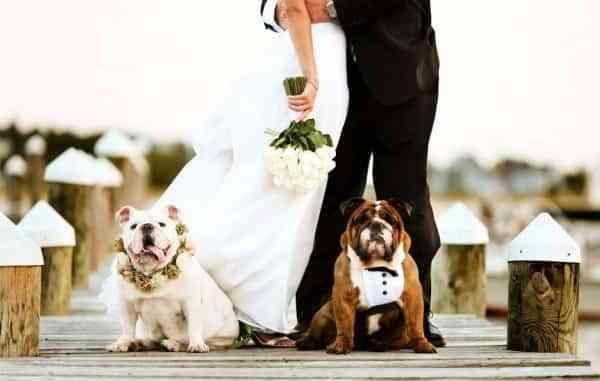 Participación de as mascotas en una boda