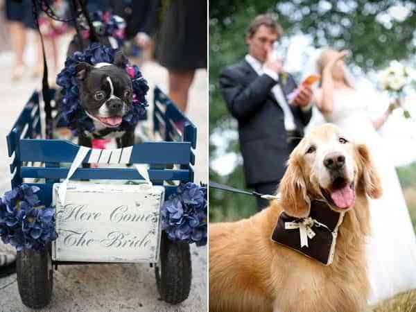 Participación de las mascotas en una boda
