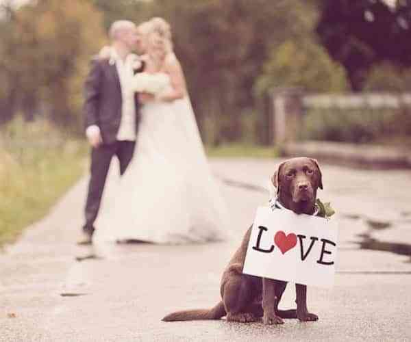 Participacion de las mascotas en una boda